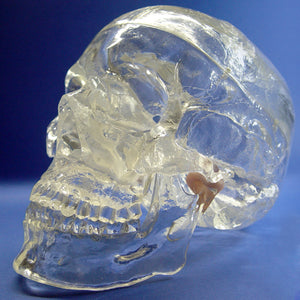 Deluxe Transparent Classic Human Skull Model 3 Parts SJTG001