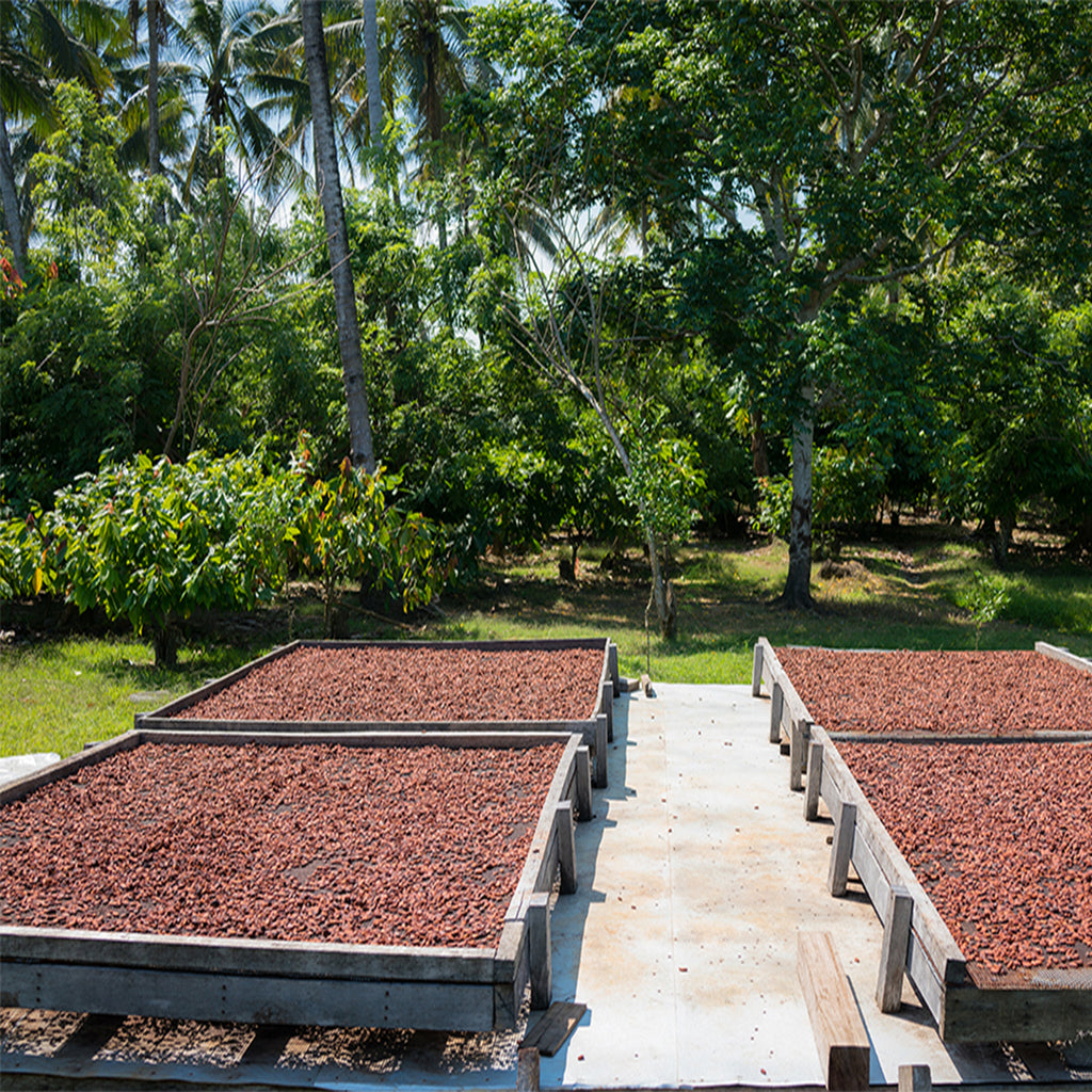 Single Origin Cocoa