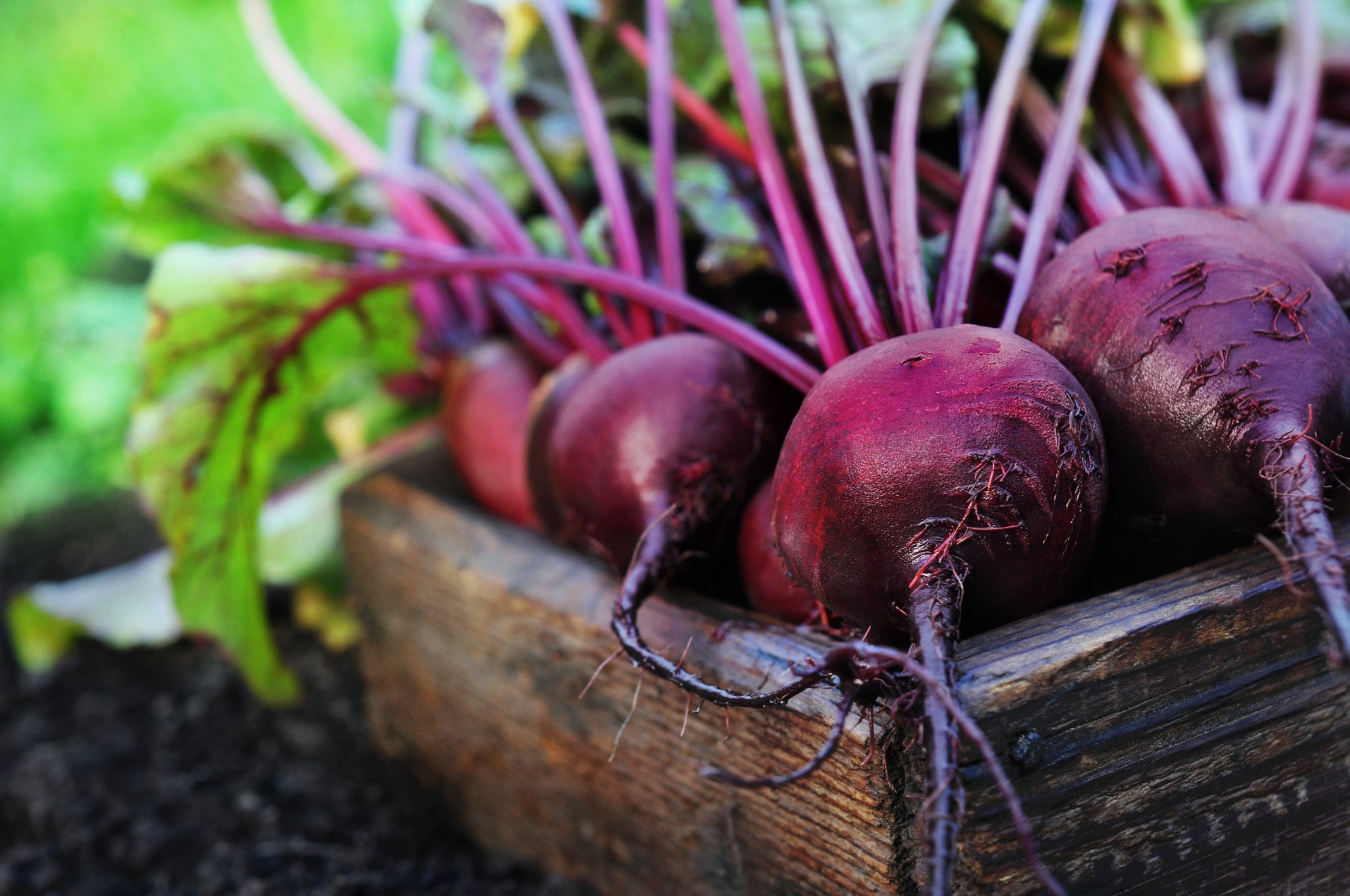 5 Reasons Why Beetroot is Great for your Health