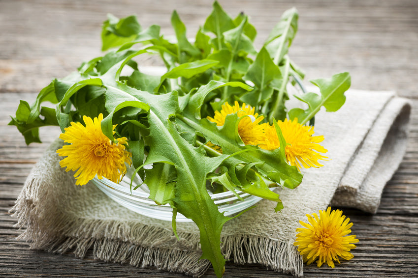 5 Ways to Improve your Health with Dandelion Root