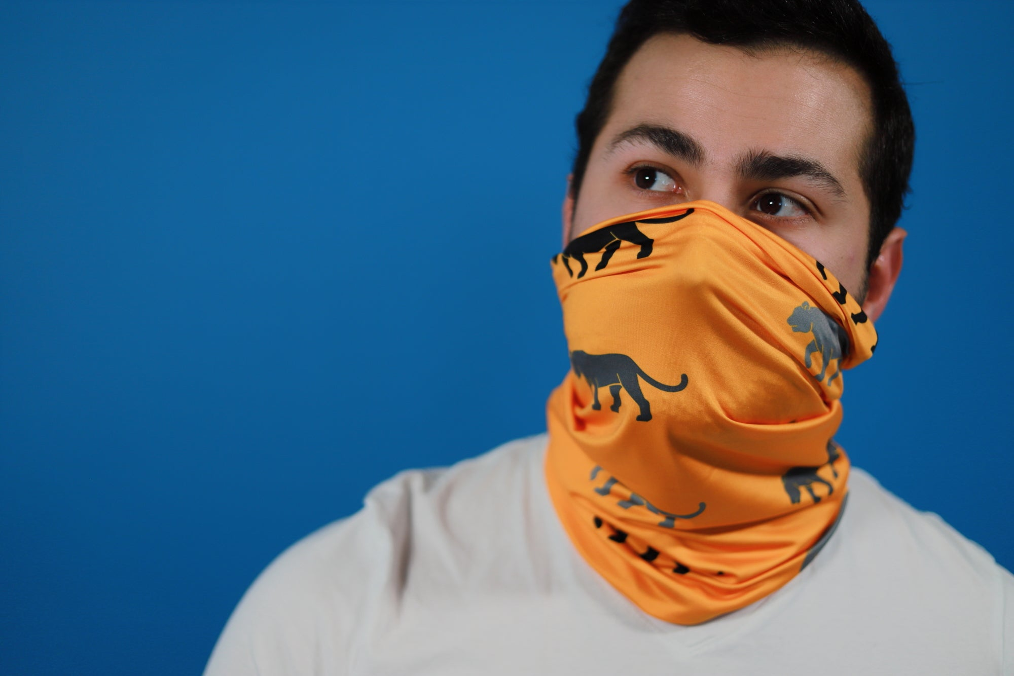 Tiger Temple Bandana