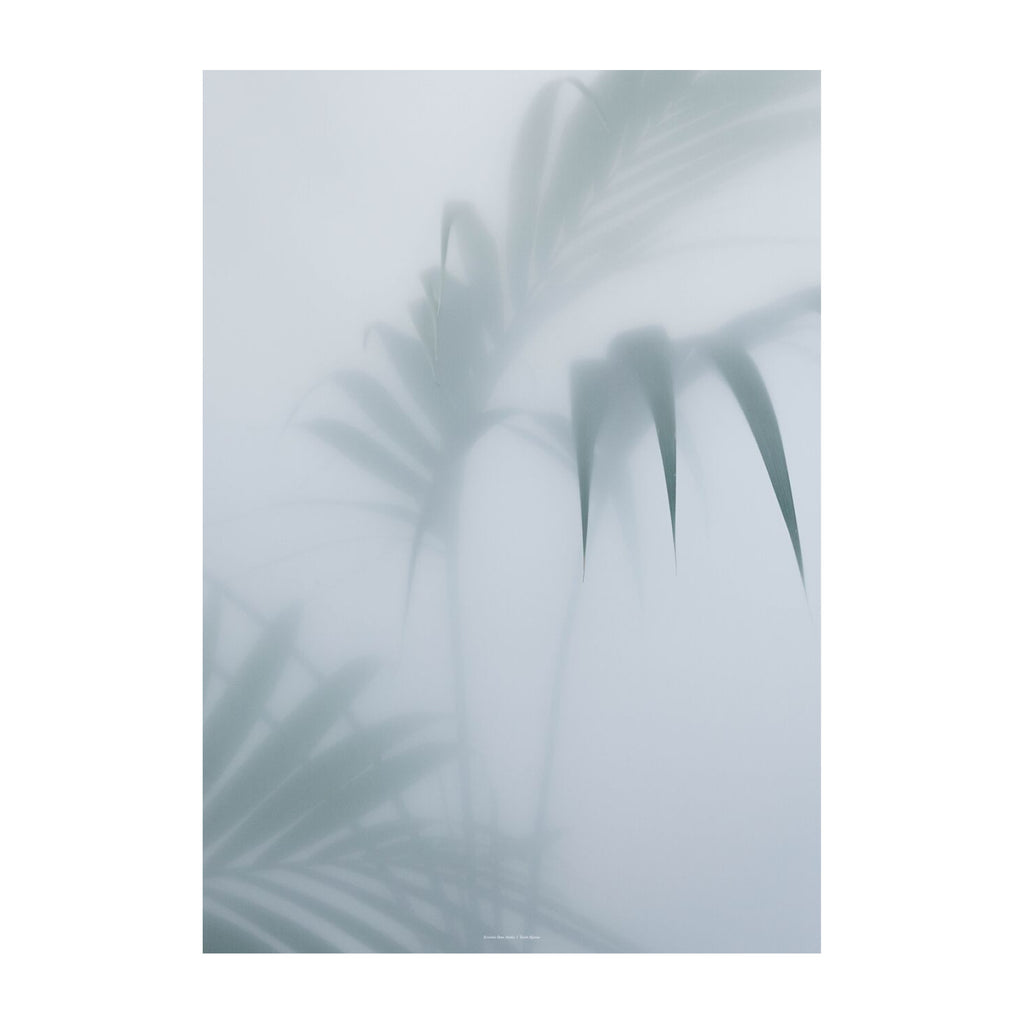Botanic Poster | Palm | Illustration |