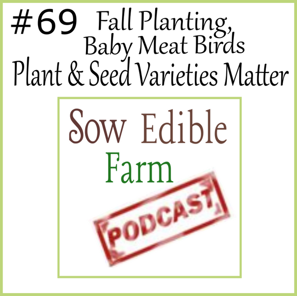 SEpp 069;  Fall Plantings, Meat Birds, & Why Plant Varieties Matter