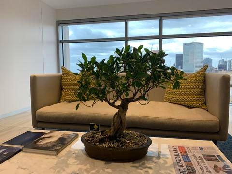 Best Bonsai Plants Melbourne