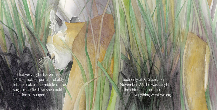 Abayomi, the Brazilian Puma | NSTA Outstanding Science Trade Book
