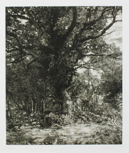 Load image into Gallery viewer, Martin Mitchell, Autumn Oak