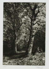 Load image into Gallery viewer, Martin Mitchell, Beeches Sketch