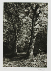 Martin Mitchell, Beeches Sketch