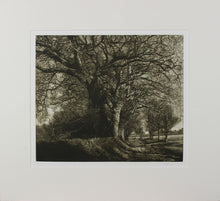 Load image into Gallery viewer, Martin Mitchell, Winter Oak Walk
