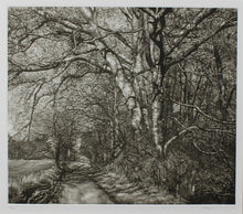 Load image into Gallery viewer, Martin Mitchell, Spring Beeches