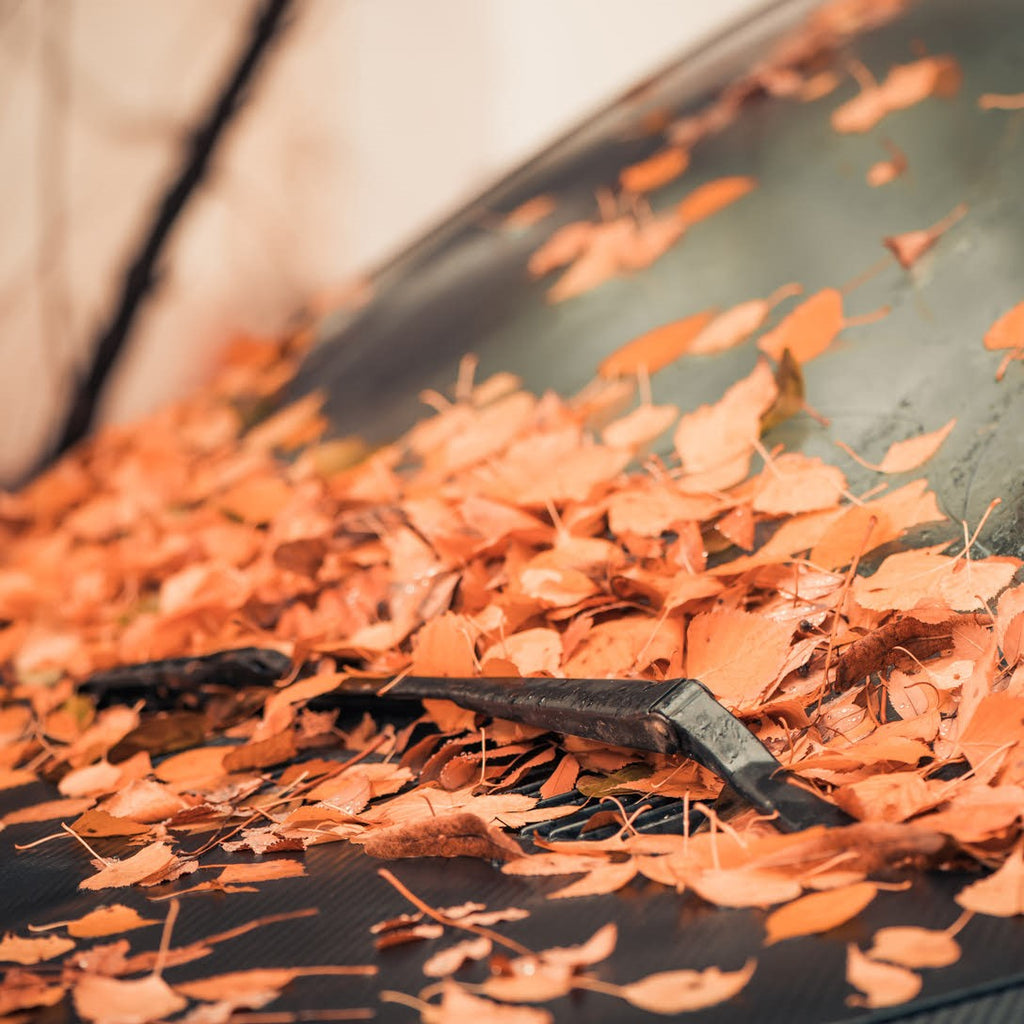 Fall Cleaning Tips For Your Car!