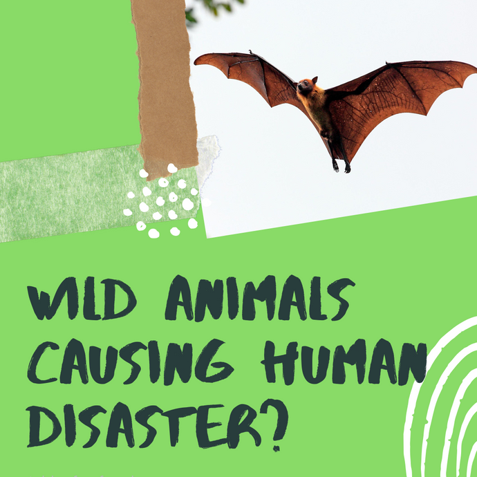 Wild Animals Causing Human Disaster?