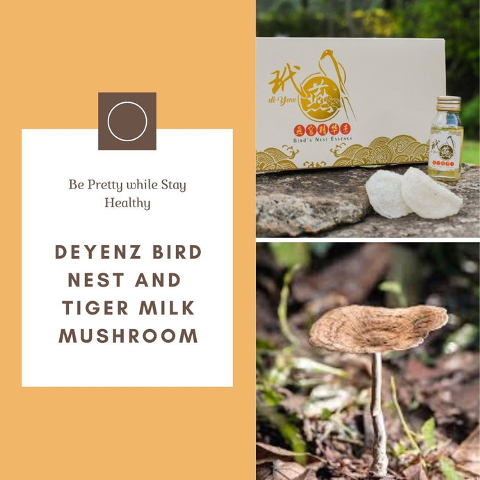 deYenz Bird's Nest and Tiger Milk Mushroom Sharing Session