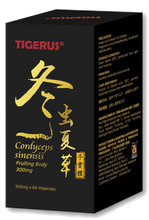 TIGERUS® Cordyceps Sinensis Fruiting Body (300mg x 60 Vegecaps) - Asian Integrated Medical Sdn Bhd (ielder.asia)