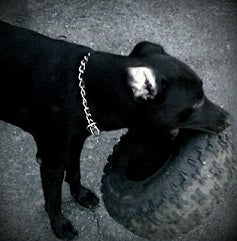 Jake as a puppy, the tire kept him from untying our shoes ....