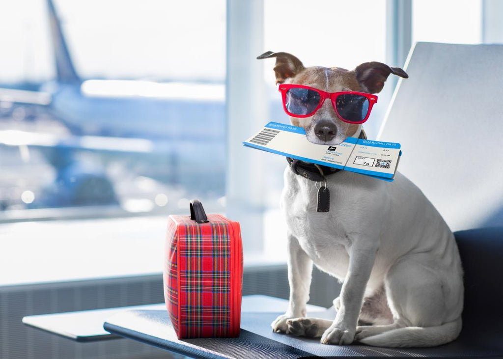 Does your current dog food qualify for Frequent Flyer points?