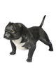 Real size american bully exotic statue