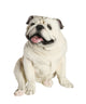 English Bulldog Statue 1:1 Real Size - Available for Pre-Order