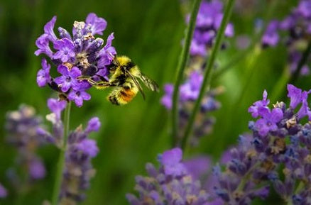 5 Ways To Create A Buzzing Wildlife Garden