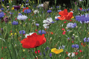 Love Is Blooming Wildflower Seed Packet Favours