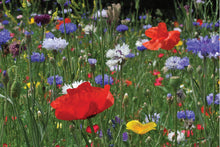 'Plant These' Wildflower Seed Birthday Party Favours