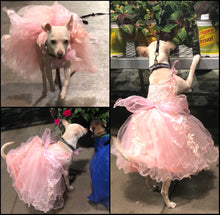 Load image into Gallery viewer, Bridesmaid, Flower Girl, Wedding or Ball Gown for Dogs: One Formal Party Dog Dress with extra full petticoat and lace trim in 9 colors!
