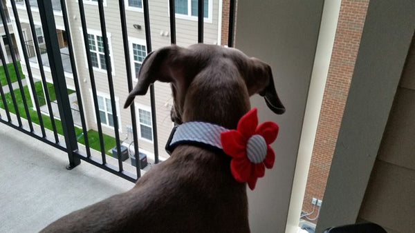 The Madison Flower Collar