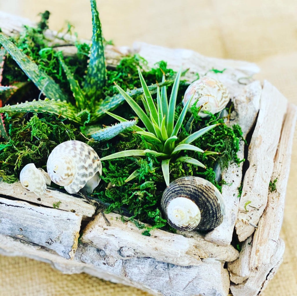 Kids Succulent Planter