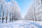 snow landscape photo backdrop nature winter scenery photography background interior decoration photo booth props Merry Xmas backdrops