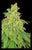 CBD Rene - <i>6 feminized seeds</i>