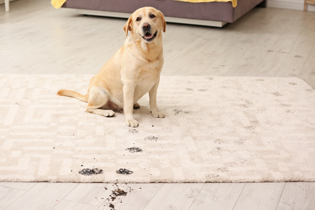 Cute Dog Leaves Spots on Area Rug
