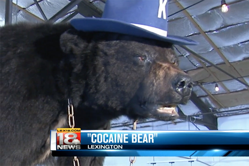 Cocaine Bear Becomes Kentucky's #1 Tourist Attraction!