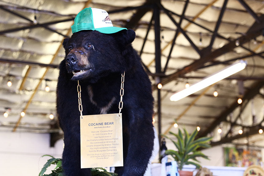 Meet Our New Mascot: Cocaine Bear
