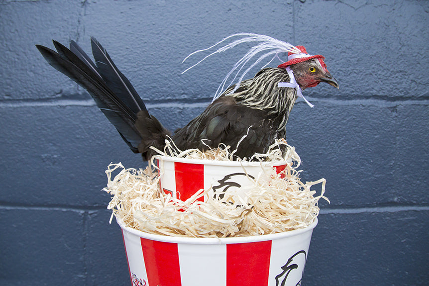 The World's Most Epic Kentucky Fried Derby Hat
