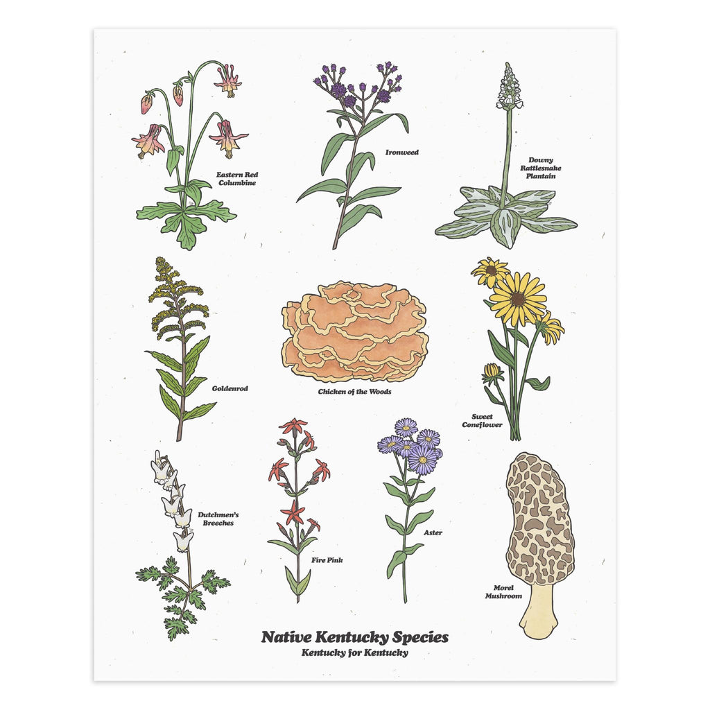 Kentucky Flora Print (White)-Prints-KY for KY Store