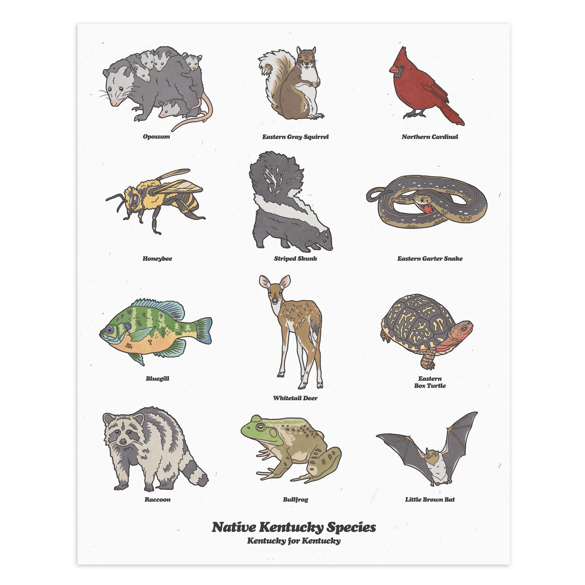 Kentucky Wildlife Print-Prints-KY for KY Store