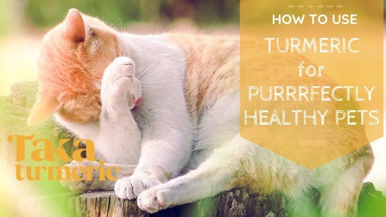 HOW TO USE TURMERIC FOR PURRRFECTLY HEALTHY PETS