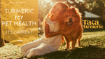 TURMERIC FOR PET HEALTH - ITS GRRREAT!