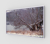 Snowy Trees on Canvas