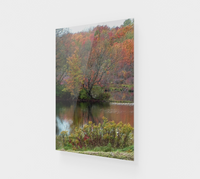 Golden Pond ACRYLITE® Print