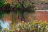 Golden Pond on Canvas