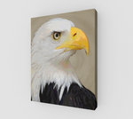 Eagle on Canvas