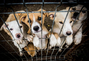 Animal Shelters are Looking for People to Foster Pets Amid Coronavirus Fear