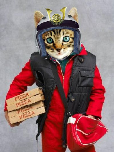 Pizza Cat Delivery