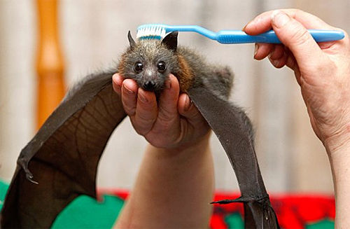weird bat cute