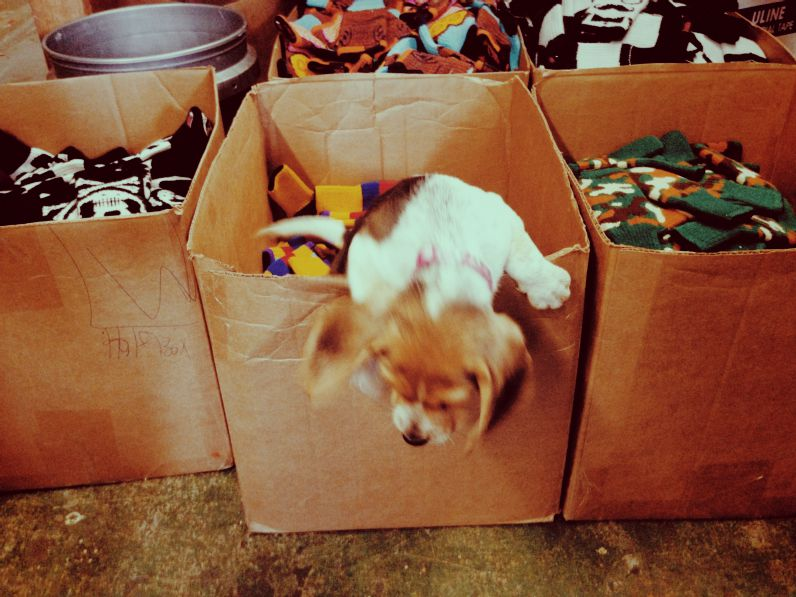 Cute puppy in a box oh my god so cute adorable
