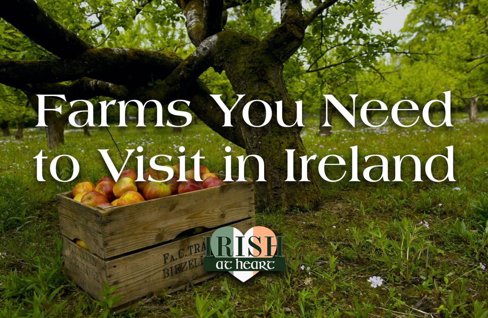 Farms to Visit in Ireland