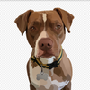 Custom Digital Dog Portrait - Stray Faces
