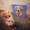 Custom Pet Portrait Canvas [Rectangle]