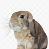 Custom Digital Bunny Portrait - Stray Faces